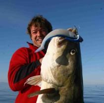 Ab Februar zieht der weltweit größte Schwarm von Laichdorsche aus den Weiten der Barentsee in den Süden.